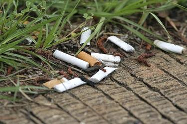 ترك سيگار ، البان